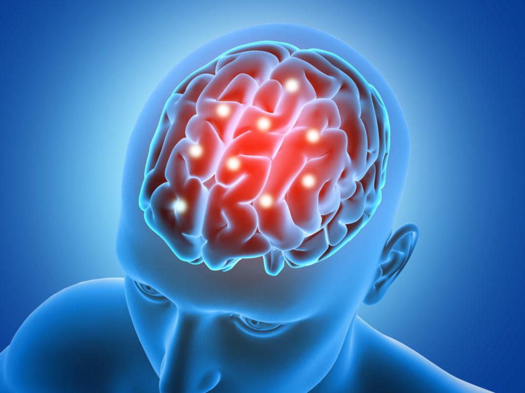 Imagem de um modelo em 3D de um cérebro humano